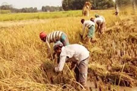 কালীগঞ্জে নিরাপদ খাদ্য উৎপাদন ও বাজারজাতকরনে কৃষক মাঠ দিবস