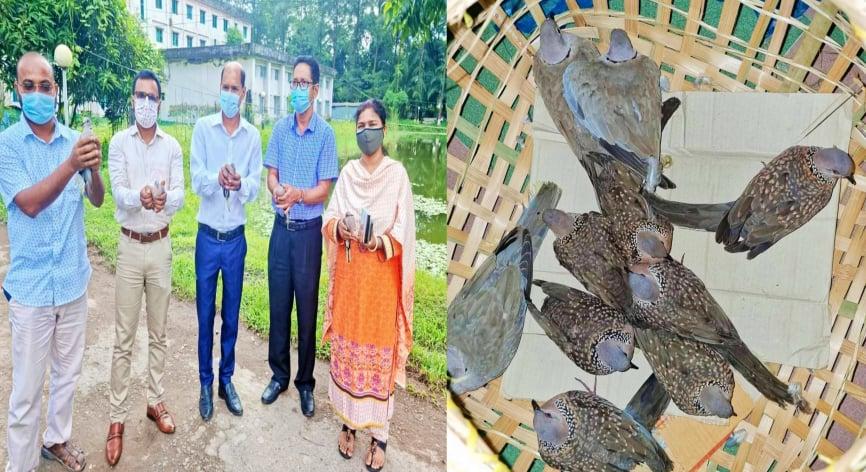 সুবর্ণচরে ১০টি ঘুঘু পাখি অবমুক্ত করল উপজেলা প্রশাসন